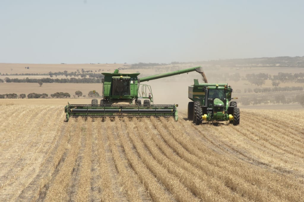 Harvesting lupins at Cunderdin at the Fulwood Farm